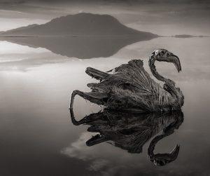 Hồ Natron – Bí ẩn hồ tử thần