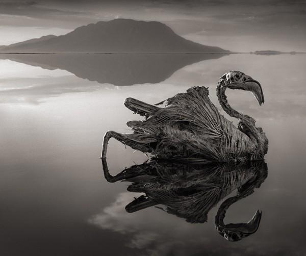 Hồ Natron - Hồ tử thần