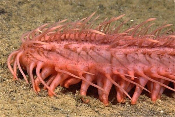 Động vật kỳ lạ - Nhện biển