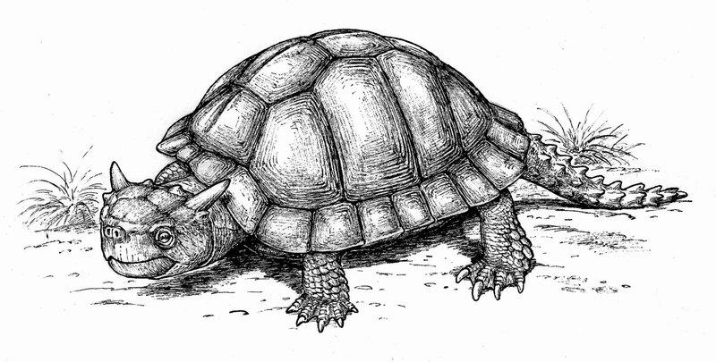 Meiolania - Loài vật đã tuyệt chủng