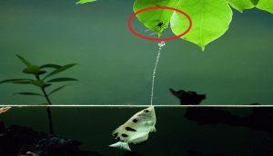 Cá Mang Rổ Dùng Đạn Nước Bắn Rơi Con Mồi