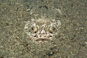 Kỳ lạ cách mà loài cá răng nhọn phóng điện săn mồi