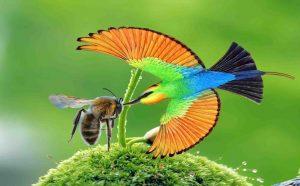 Chim Trau Trảu – Sát thủ săn ong