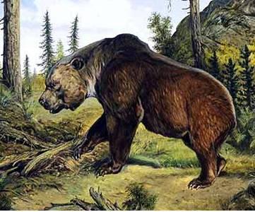 Gấu Atlas - Loài vật đã tuyệt chủng