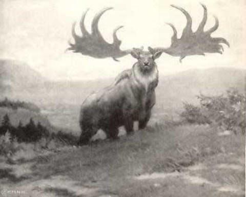 Hươu Ireland - Loài vật đã tuyệt chủng
