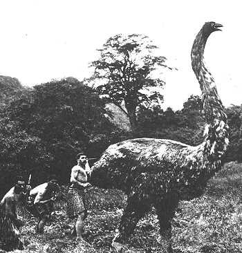 Moa khổng lồ - Loài vật đã tuyệt chủng