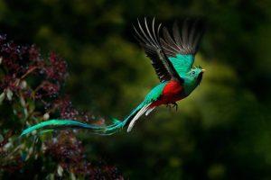 Nuốc Nữ Hoàng – Loài Chim Đẹp Trong Thần Thoại Guatemala
