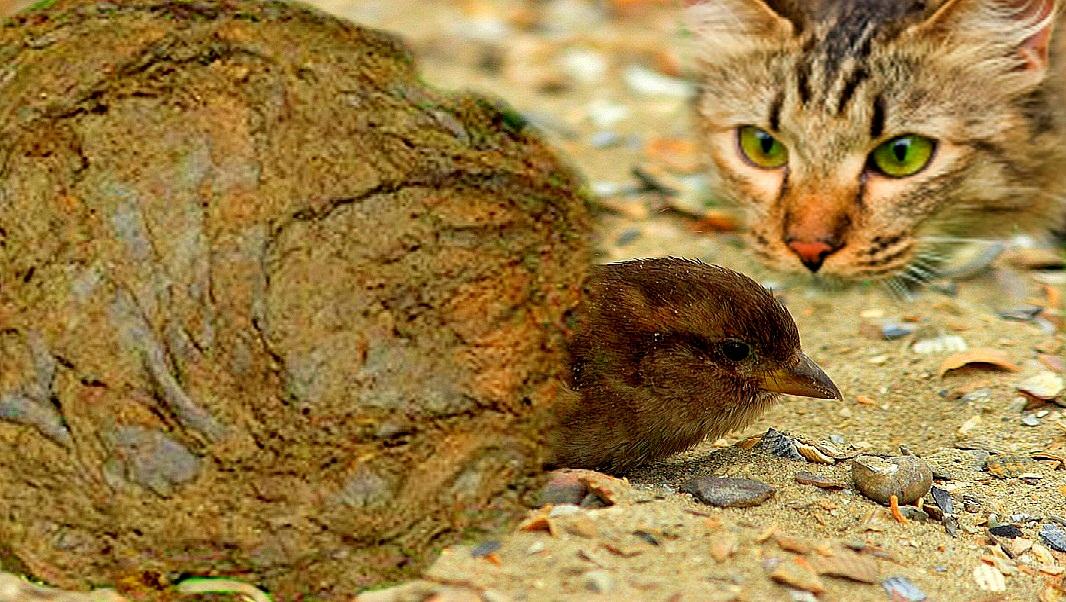 Câu chuyện chim sẻ và bãi phân bò