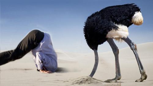 Đà điểu châu Phi đâm đầu xuống cát để tránh kẻ thù