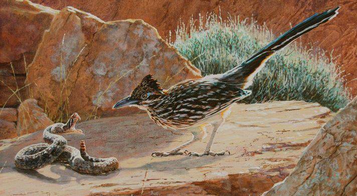 Chim chẹo đất và con mồi