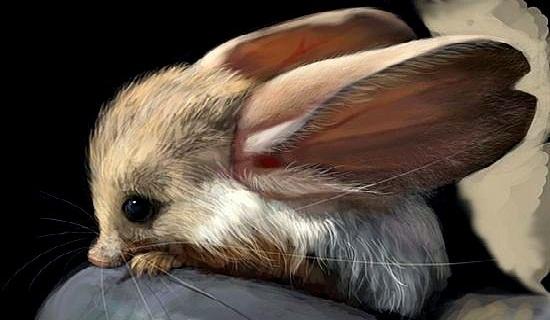 Chuột nhảy sa mạc tai dài