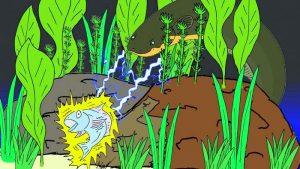 Lươn Điện | Tuyệt Tác Của Tiến Hoá