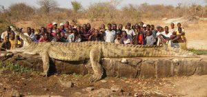 Cá Sấu | Sát Thủ Đầm Lầy