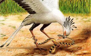 Diều Ăn Rắn | Loài Chim Săn Mồi Chuyên Ăn Rắn