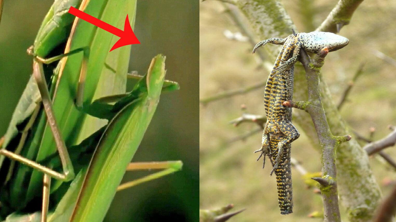 5 Hành Vi Kỳ Lạ Trong Thế Giới Loài Vật