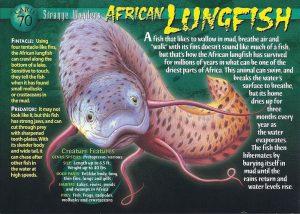 Cá Phổi Châu Phi Sống Được Trong Đất Khô Không Có Nước