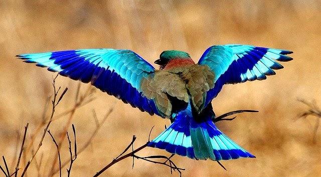 Chim sả rứng với bộ lông nhiều màu