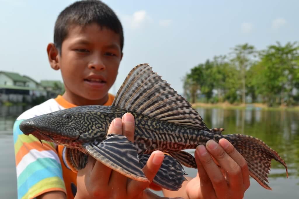 Cá Lau Kiếng