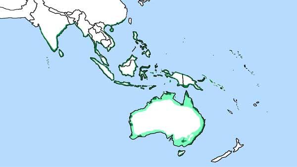 Phạm vi phân bố Đại bàng biển bụng trắng