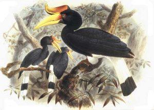 Chim Tê Điểu Và Lối Sống Bí Ẩn Nơi Thâm Sơn Cùng Cốc