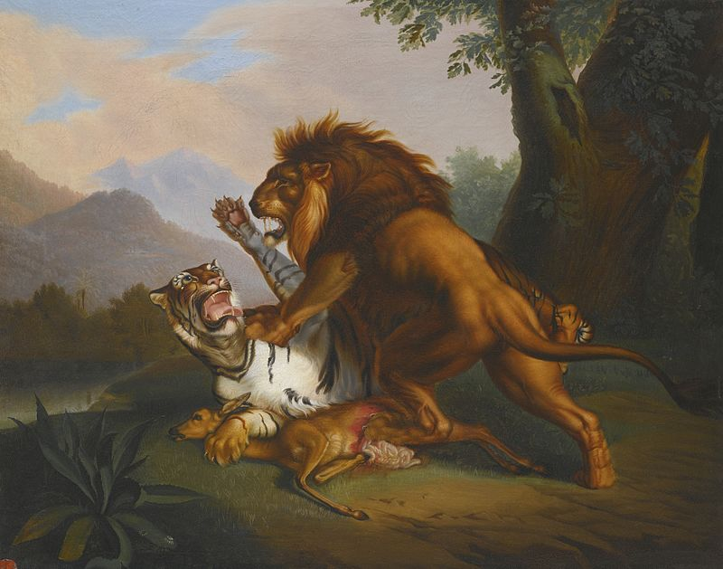 Hổ hay Sư tử, loài vật nào thật sự mạnh hơn