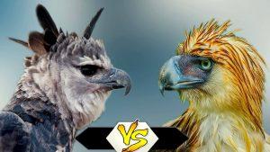 Đại bàng Harpy & Đại bàng Philippines – Kẻ nào mạnh hơn?