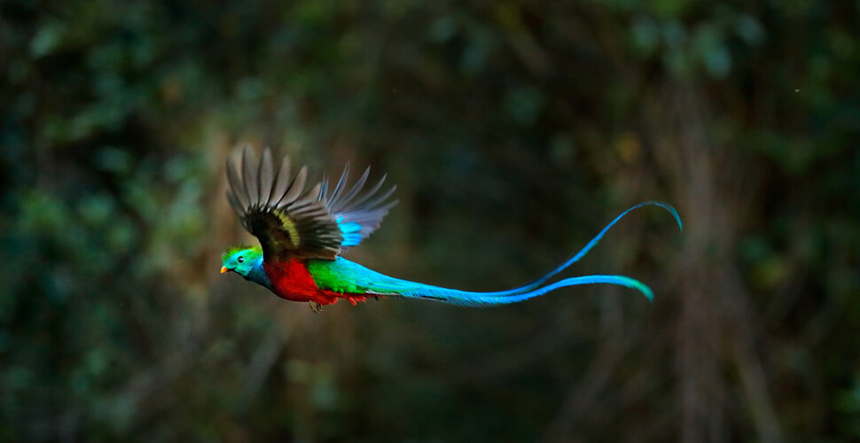 Chim Nuốc nữ hoàng