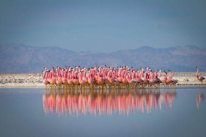 Chim hồng hạc và vũ điệu sinh sản
