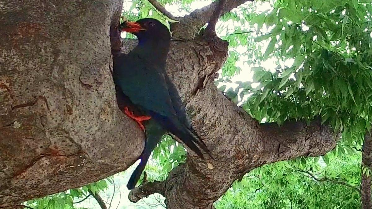 Tổ chim trong bọng cây