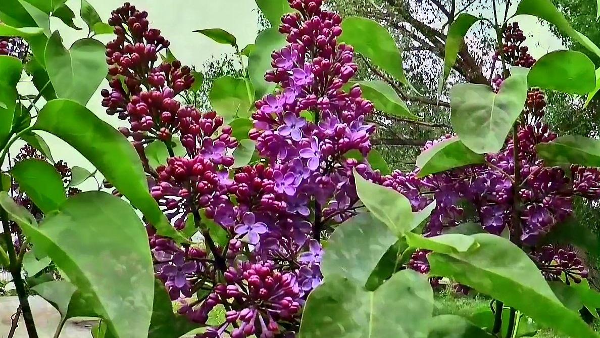 Hoa rừng mùa xuân